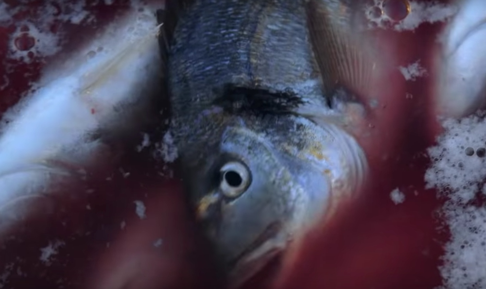 Feeding Wild Fish To Farmed Fish Is Crippling The Seas, Says Report