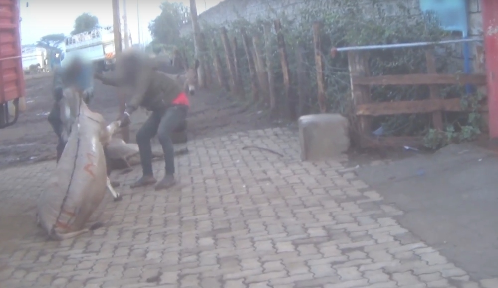 Donkey Abuse In African Abattoirs Revealed By Vegan Activists