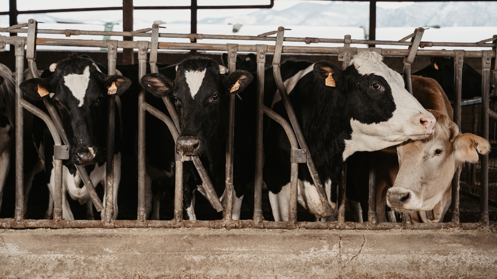 'We Can End Animal Agriculture By 2035', Says Scientist