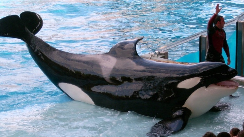 SeaWorld Comes Under Fire As Ex-Trainers Claim Whales Were Drugged And Starved