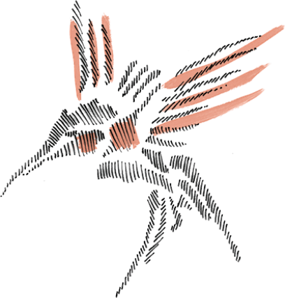 Kolibri Logo
