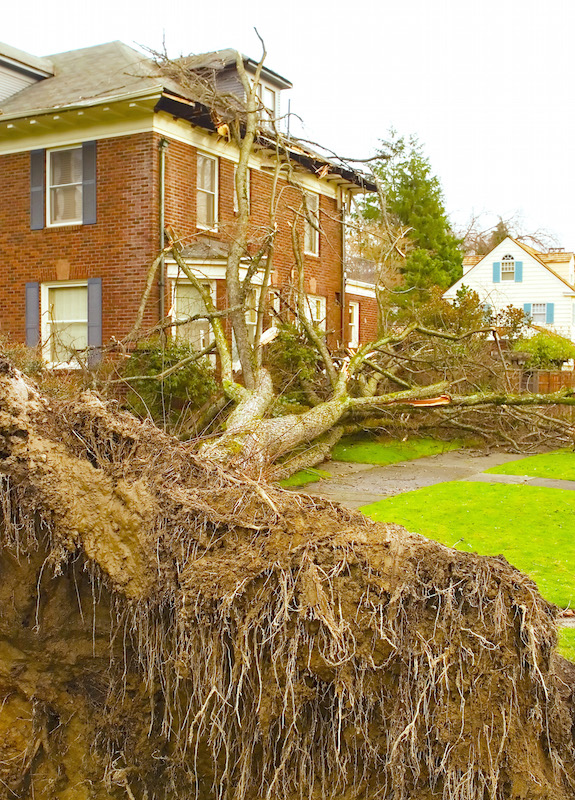 tree removal services bellingham wa
