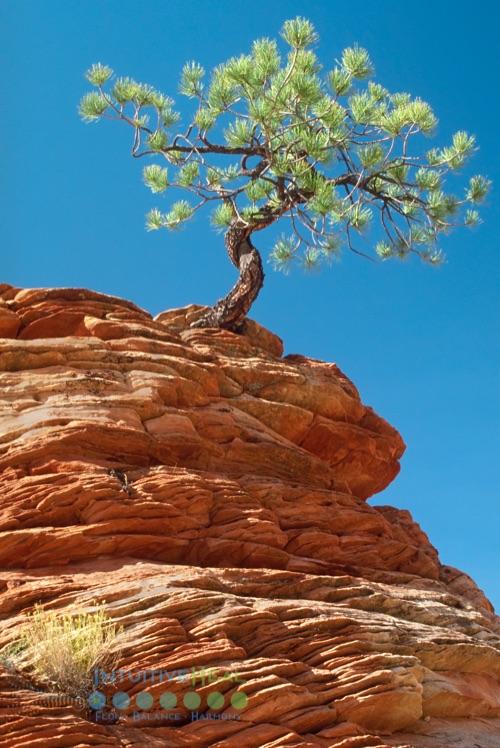 Photo of a single tree on a rocky outcrop