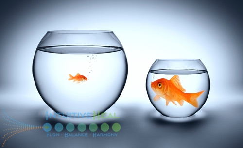 Photo of tiny goldfish in big bowl and large goldfish in small bowl