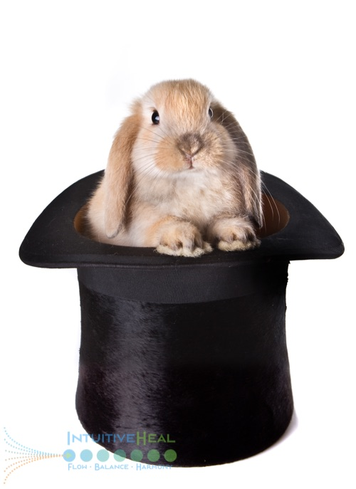 Photo of a rabbit in a hat