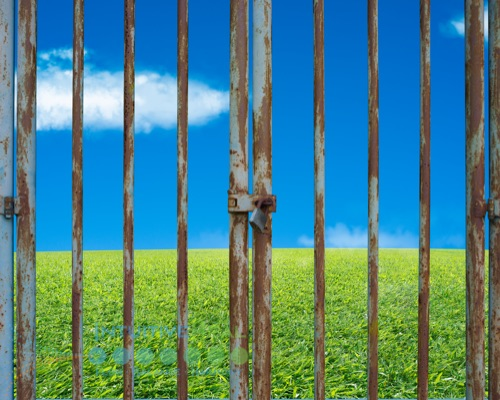 Photo of rusty gate with green grass and blue sky in backgroun