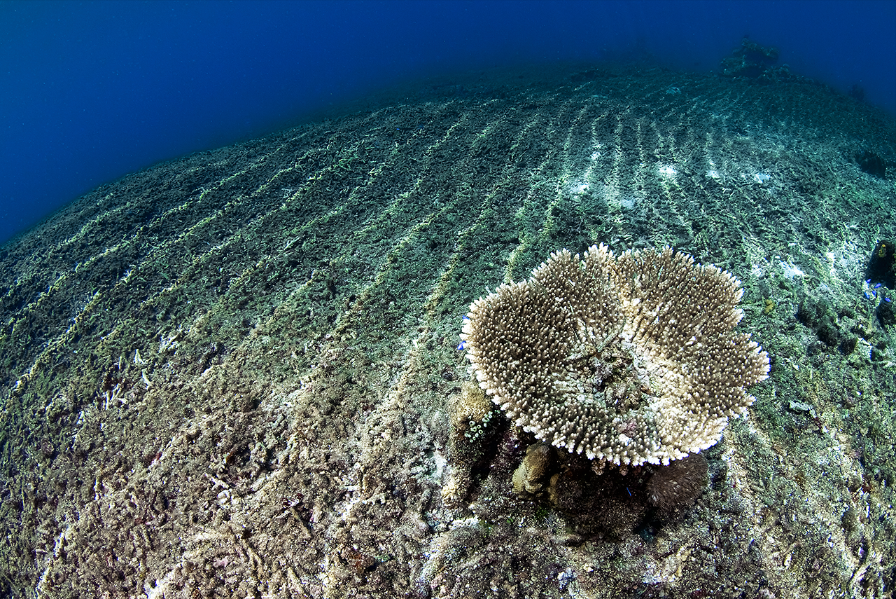 winners gallery photo essay coral reefs finalist