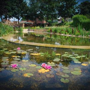 Natural Pond Planting