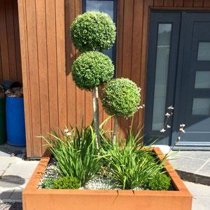 Modern Plants