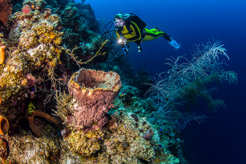 photo of scuba diver along the edge of the Belize Barrier Reef (c)