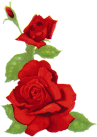 photo of red rose funerals