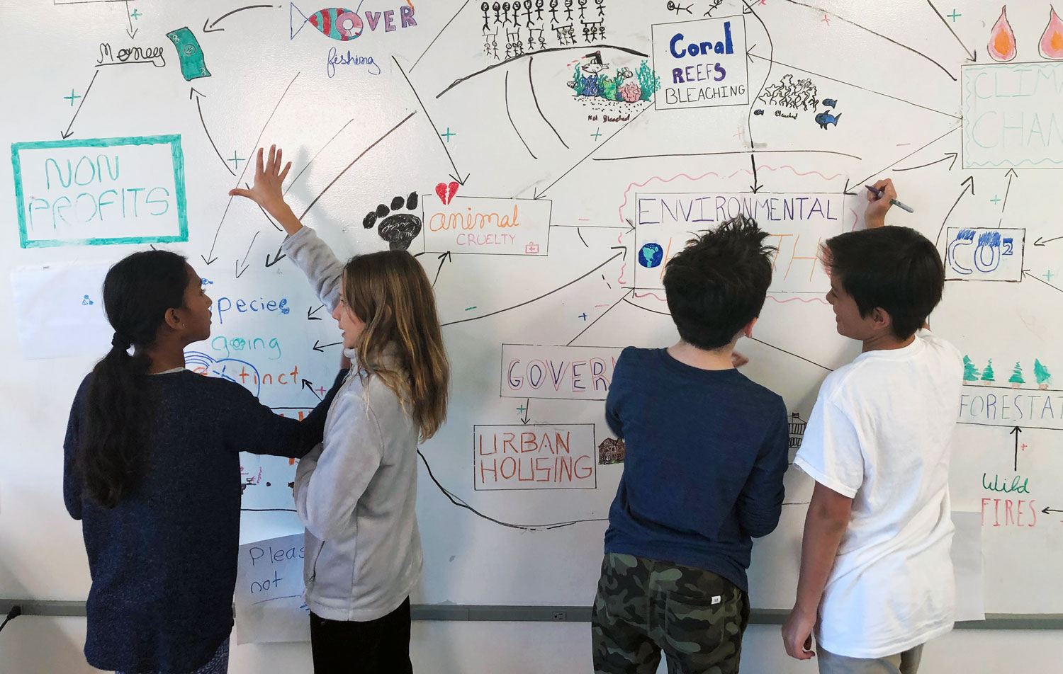 Students whiteboard about ecosystems