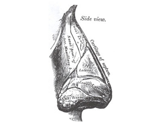 Side View of Nose