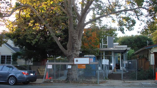 What if we thought of the tree protection zone as also a soil protection zone? Photo: Ellyn Shea
