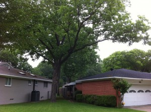 homeowner tree responsibility
