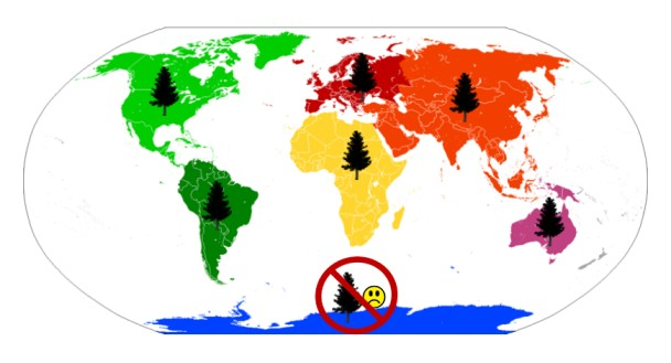 Map of the world showing which continents pine trees grow on.