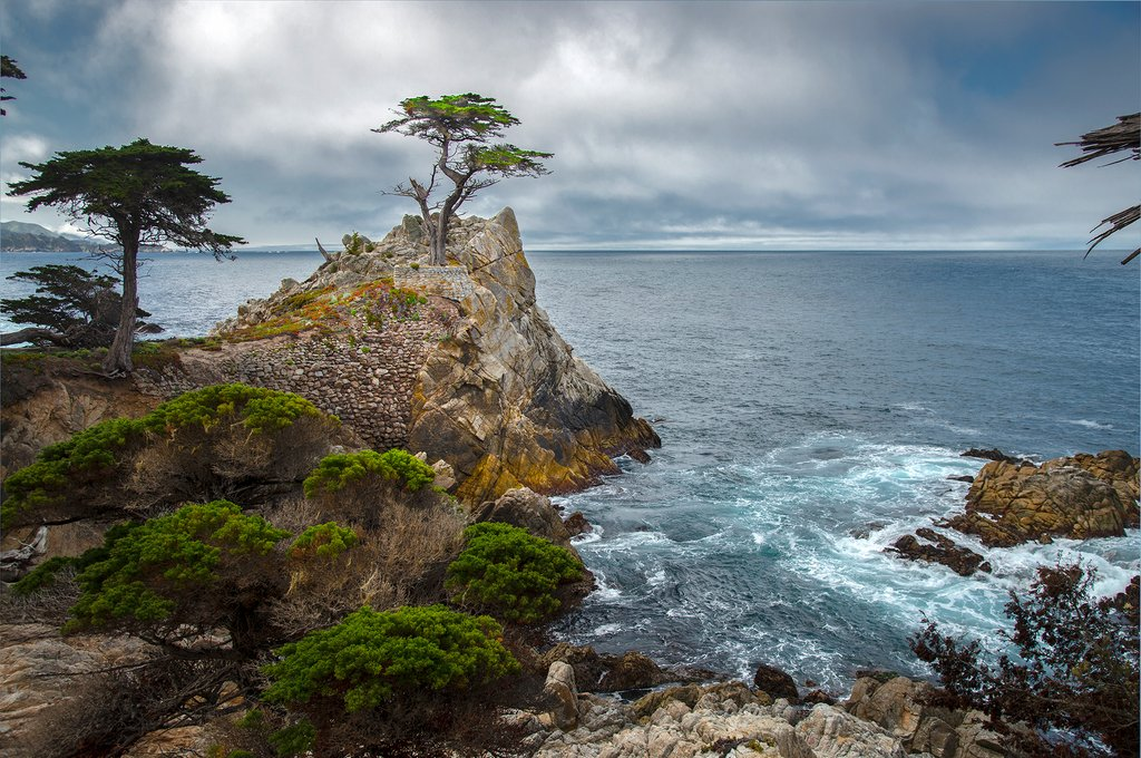 Image result for lone cypress