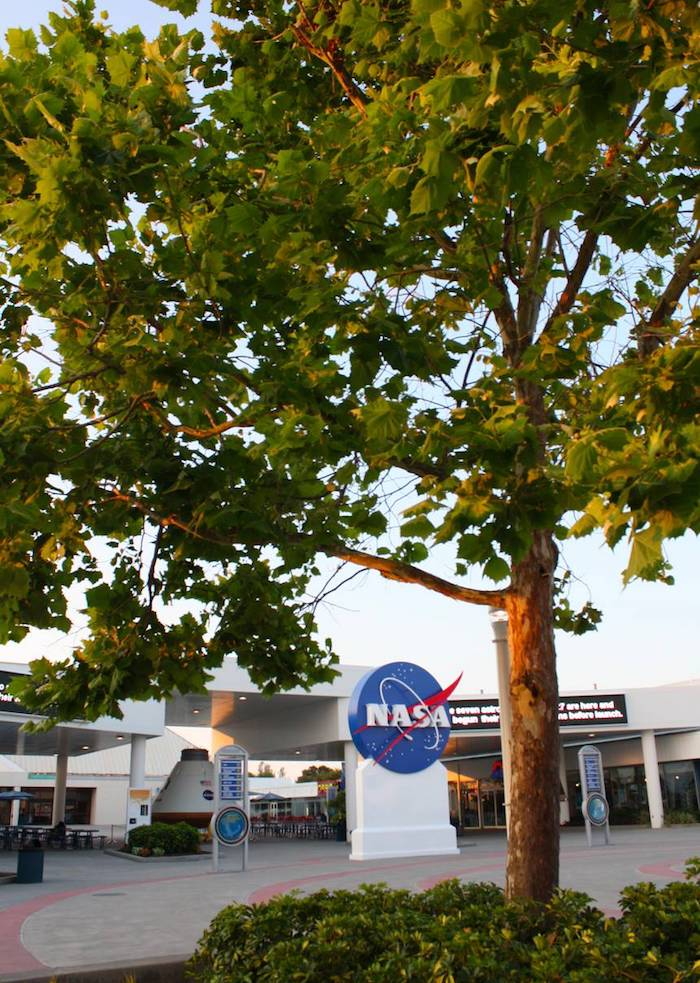 Moon tree planted at the Kennedy Space Center Visitor Complex courtyard