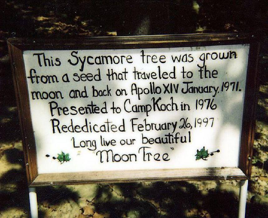 Moon trees plaque