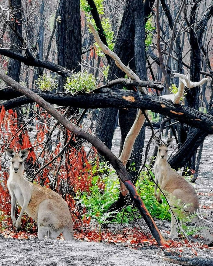 Australia-Forests-After-Wildfires-Photo