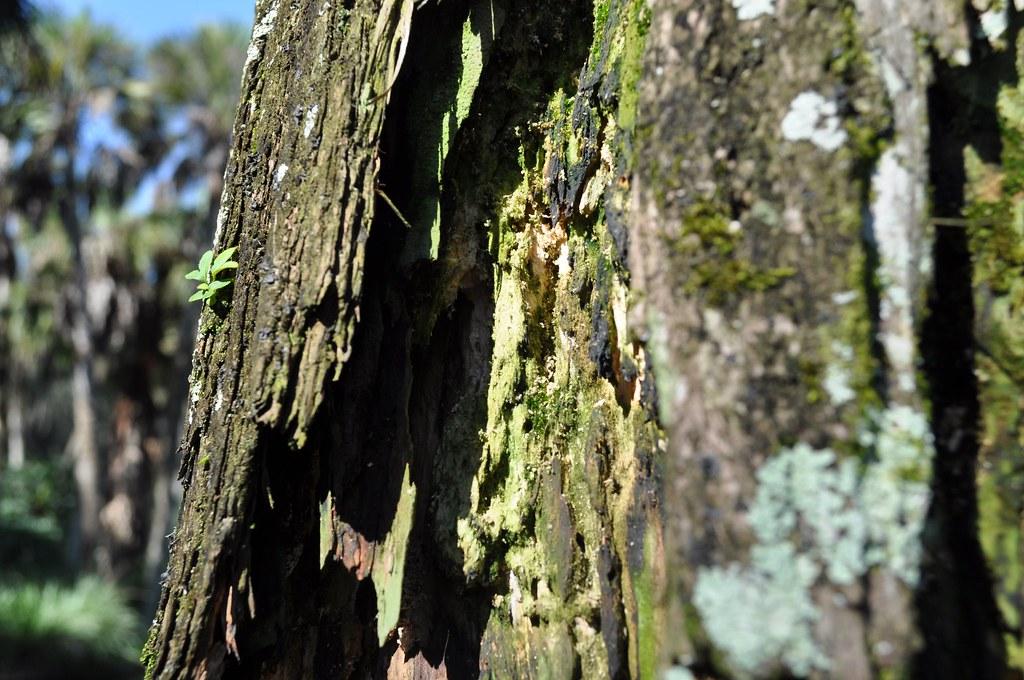 Cracked Tree Trunk | Photo by Heidi Mandelin | Bok Tower Gardens ...