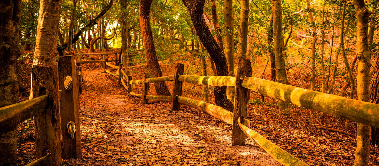 Where to View Fall Foliage in NJ and DE   Cape May-Lewes Ferry