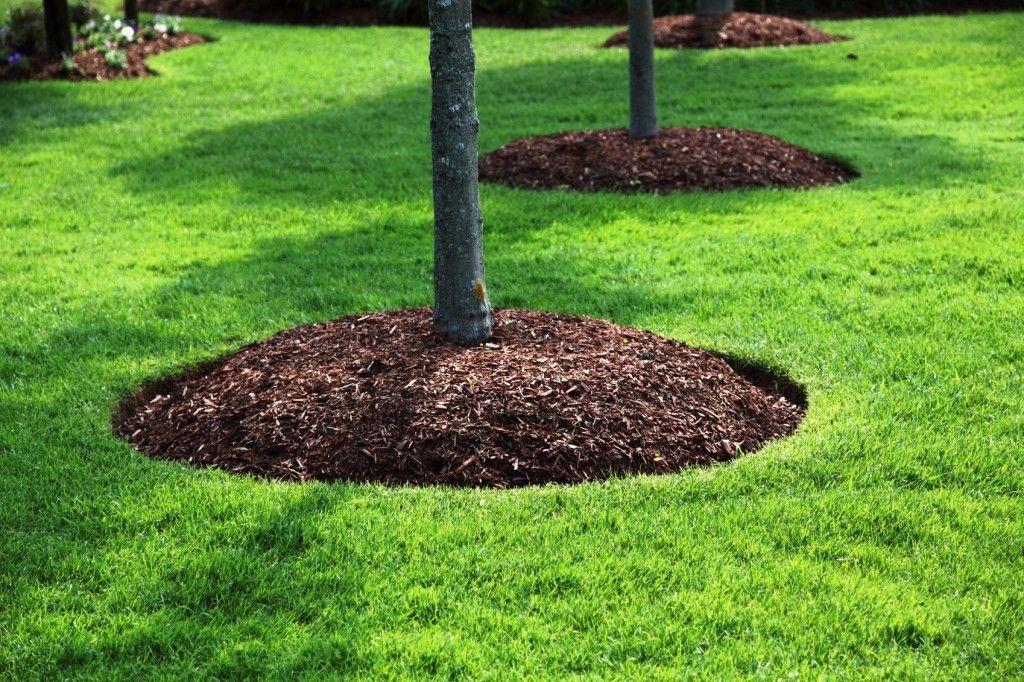 Image result for mulch around tree