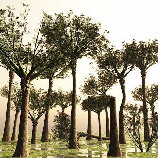 Paleobotany Blog: Earth's first tree...