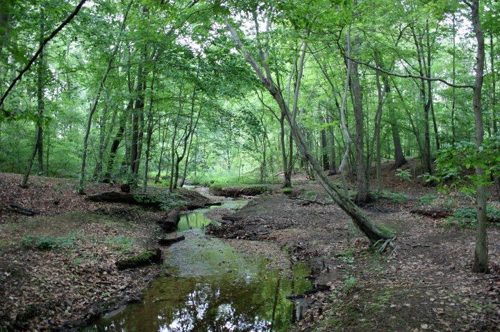 Saddler's Woods NJ | Walk in the woods, Country roads, New jersey