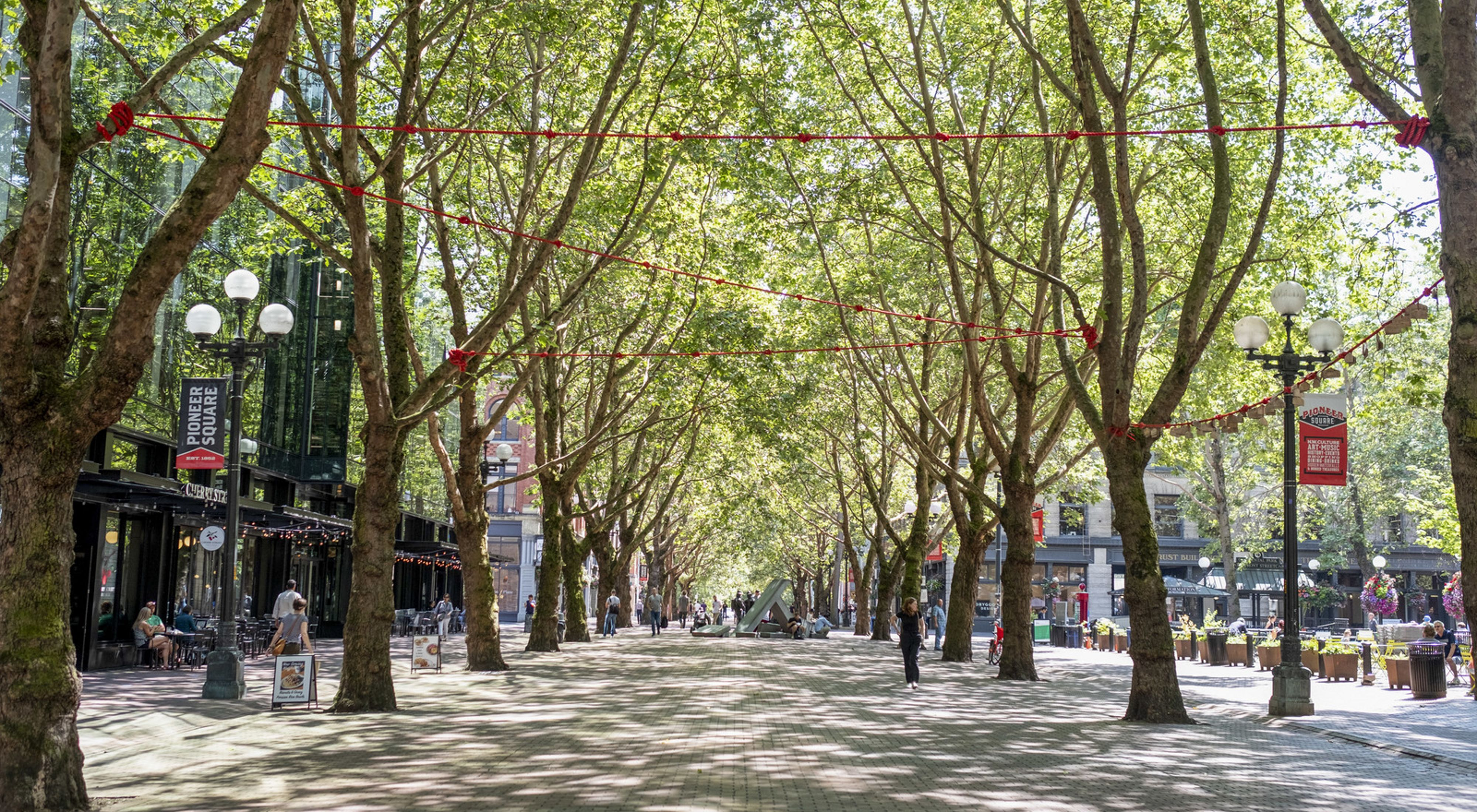 Urban Trees and Climate Change