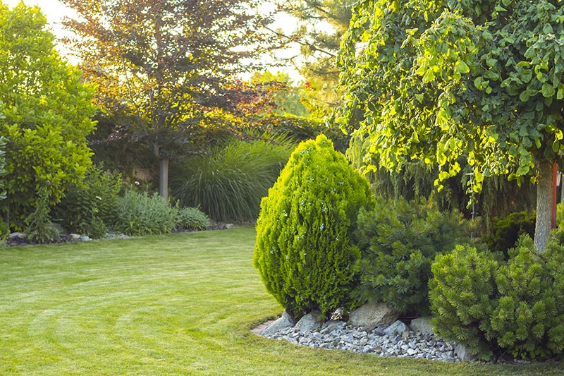 3 Tips For Designing a Beautiful Landscape with Trees | Vintage Tree Care