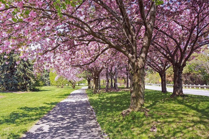 The Essentials of Spring Tree Care - Trees Unlimited