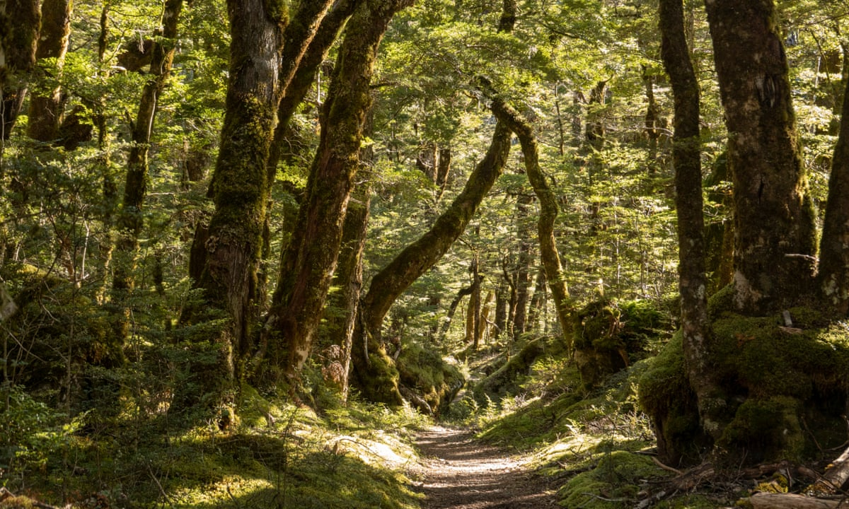 Getting back to nature: how forest bathing can make us feel better   Trees  and forests   The Guardian