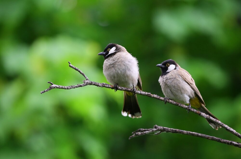 How to Record Bird Sounds (Gear, When and Where) — Acoustic Nature
