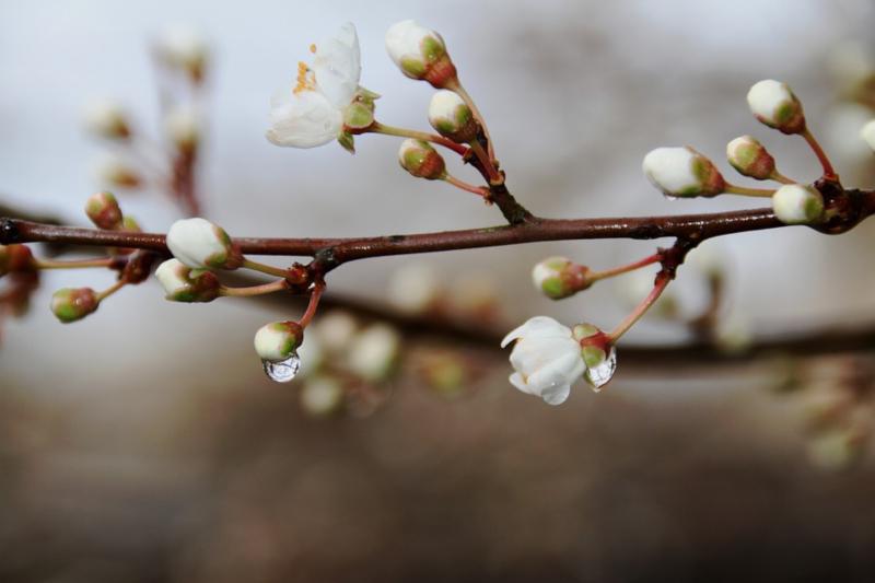 Song Spotlight: Budding Trees - Joyfully, Christa