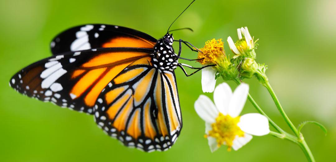 Bees, Birds & Butterflies   TLC Garden Centers