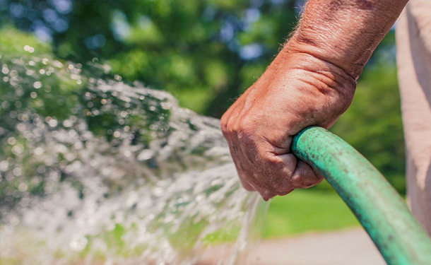 How & When to Properly Water Your Trees – The Tree Care Guide