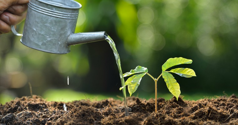 Tips on Watering Newly Planted Trees | The Woodsman Tree Service