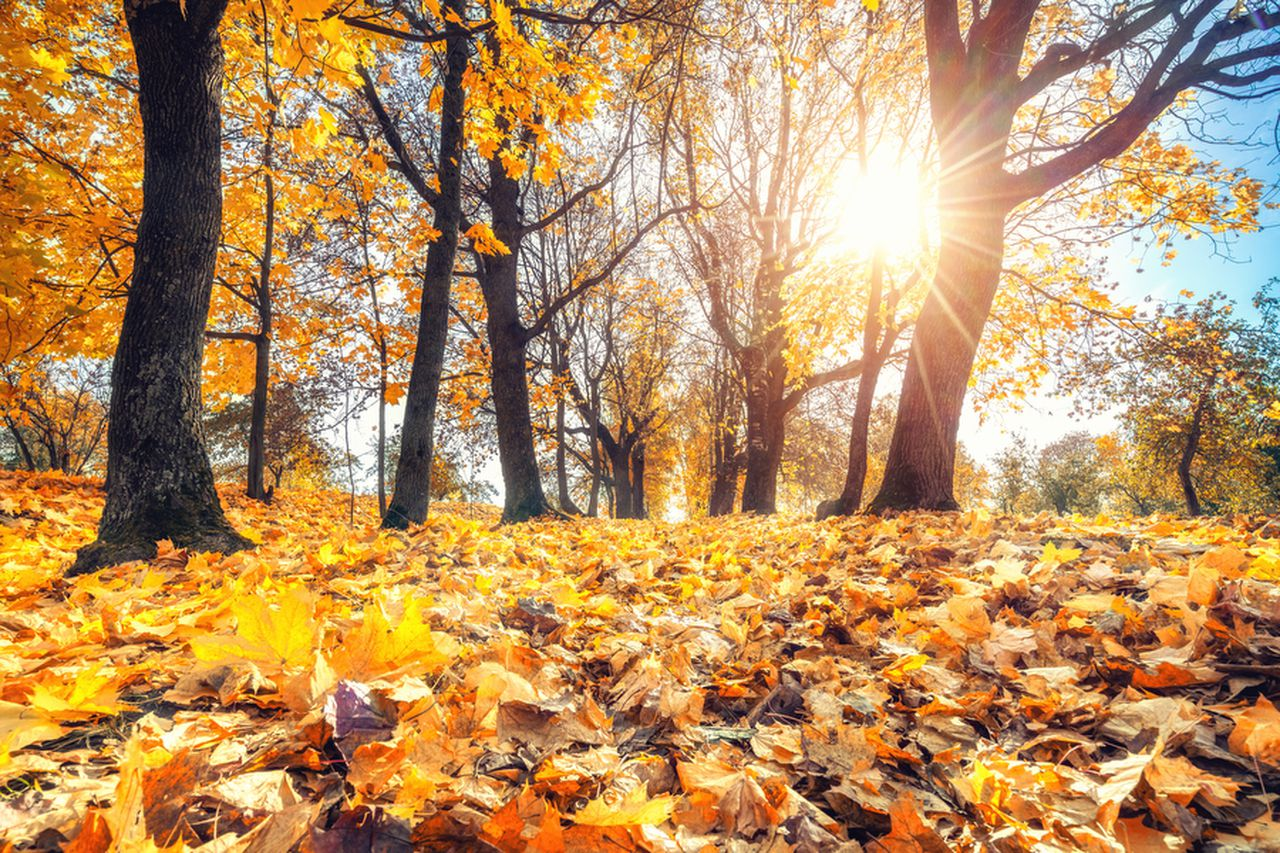 Autumn equinox: When is the first day of fall 2021? What you need to know.  - nj.com
