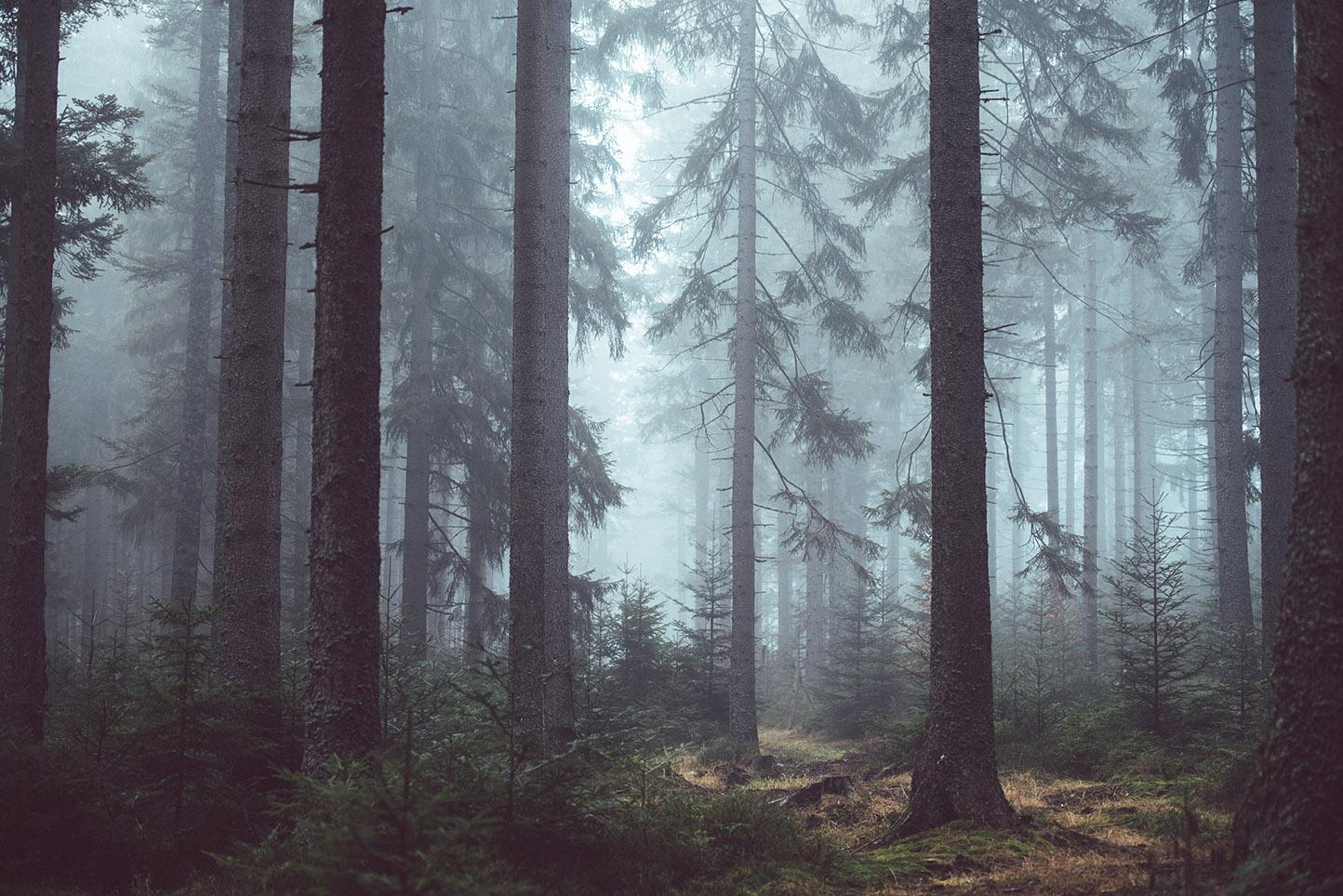 How to Choose a Tree Service Company
