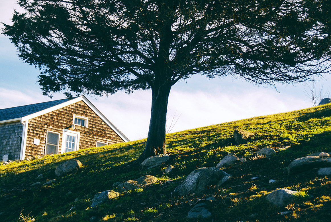 Tree Caring Tips