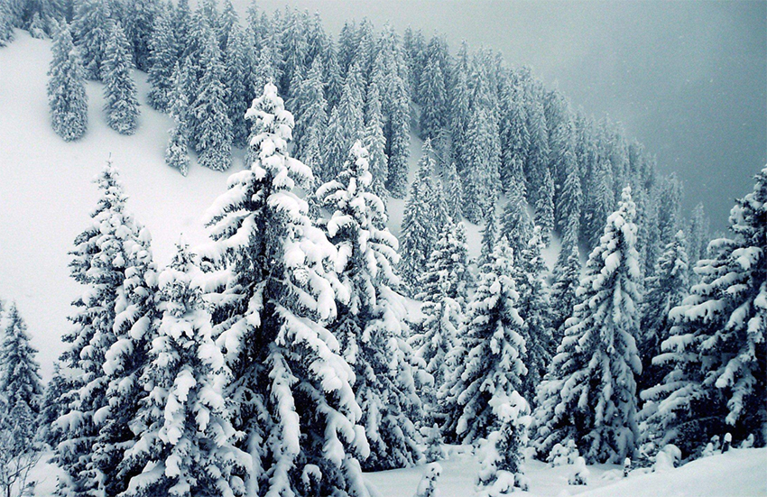 How to Care For Trees in the Winter