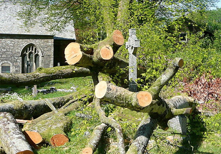 Tree Removal: A How-To