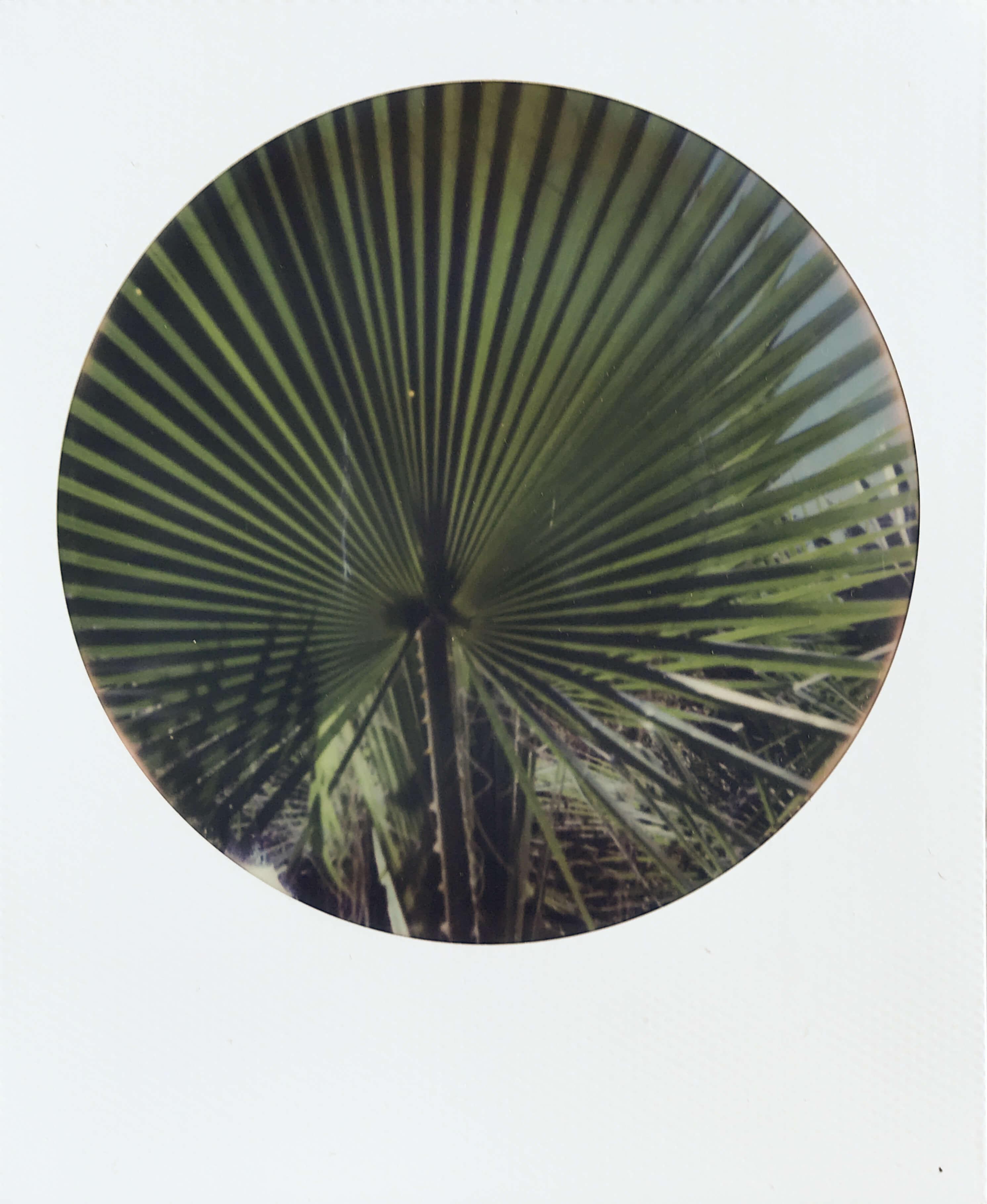 Polaroid of a palm