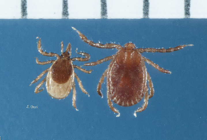 fall ticks