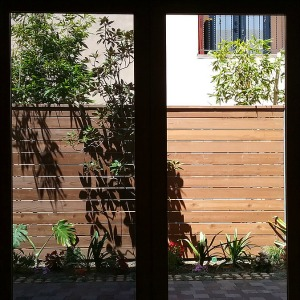 Photo from inside house of window tinting.