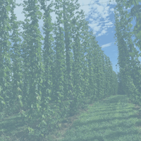 photo of hops farm from logo design client testimonial