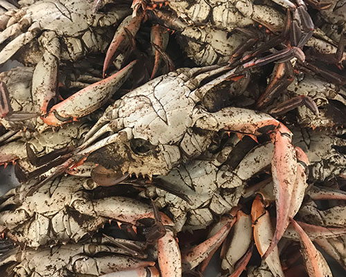 """Crabs Boiled Fresh """"Cold"""""""