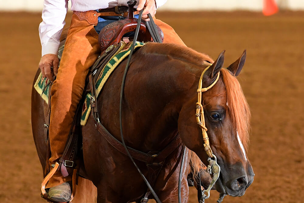 There will be literally hundreds of different contests featuring Arabian horses, which are generally considered the most beautiful, pleasant and athletic breed.