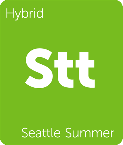 Leafly strain card for Seattle Summer